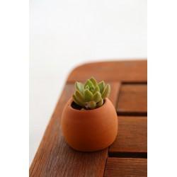 Succulente pot brut