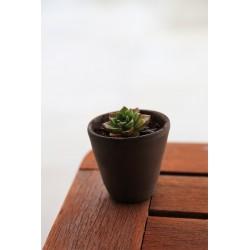 Succulente pot noir